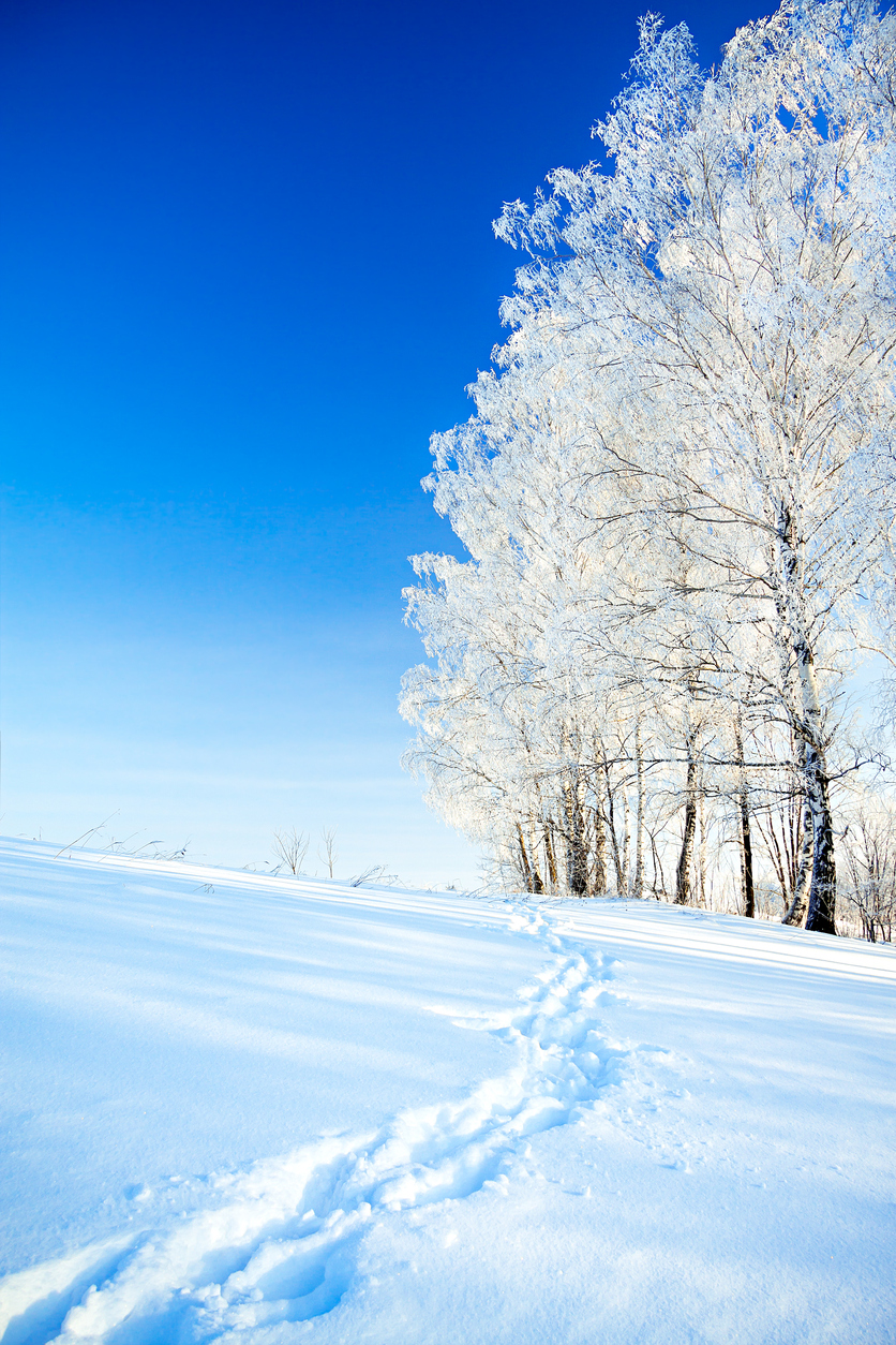 beautiful  winter landscape a with the blue sky, a  footpath  and the forest