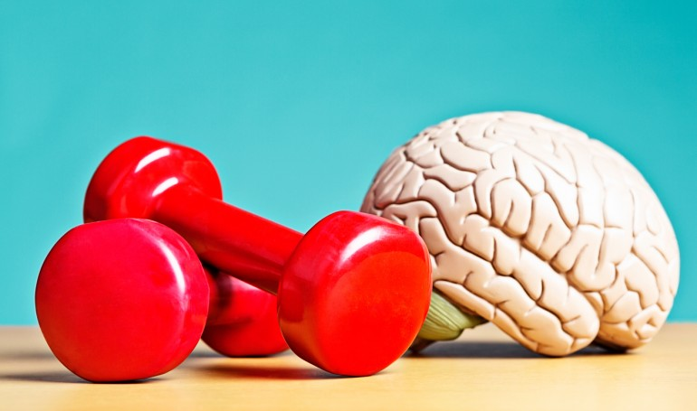 Intellectual heavyweight! Model brain with barbells
